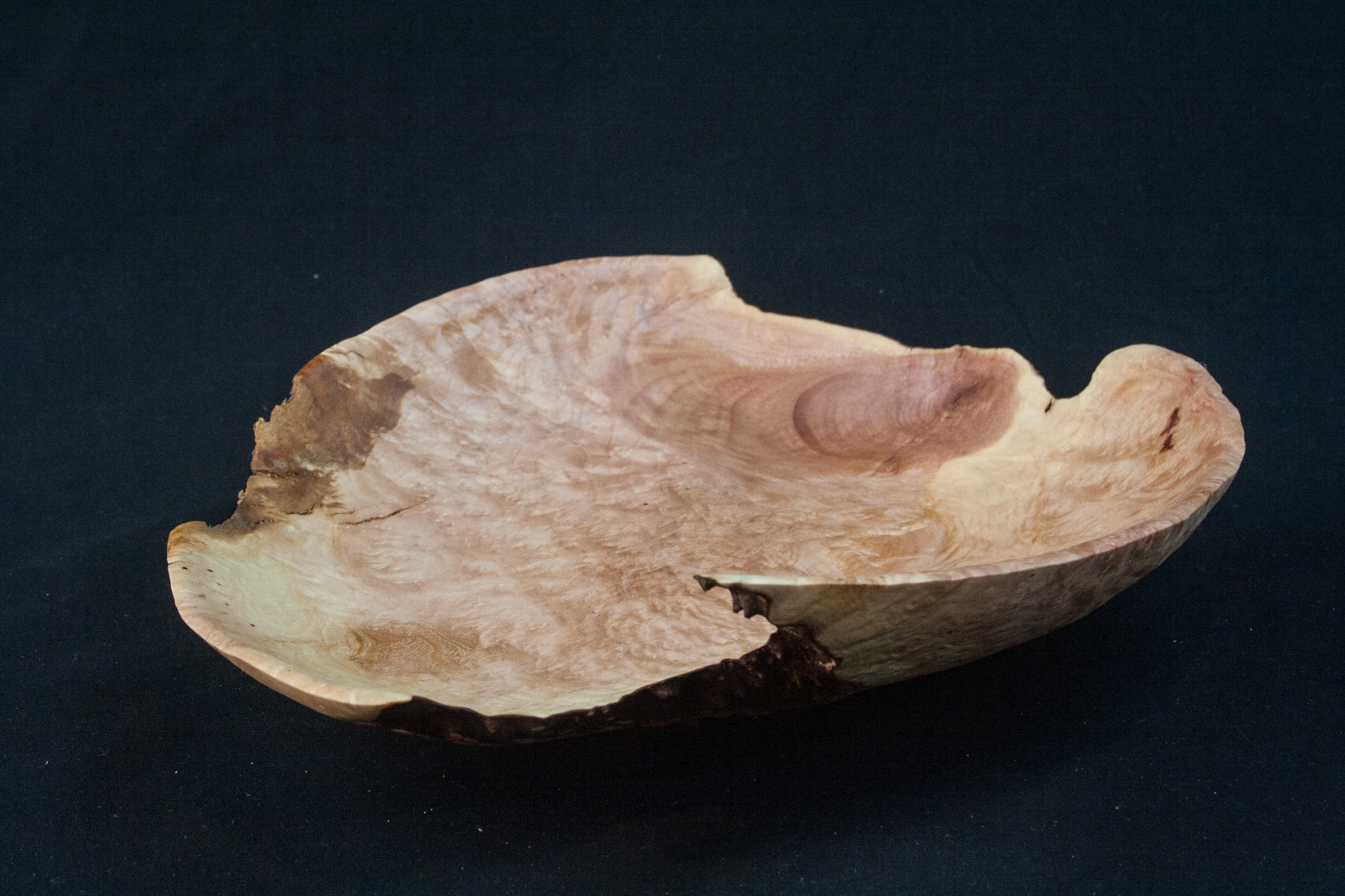 129 Madrone Burl Distorted 2.5 x 9.......  $83......SOLD