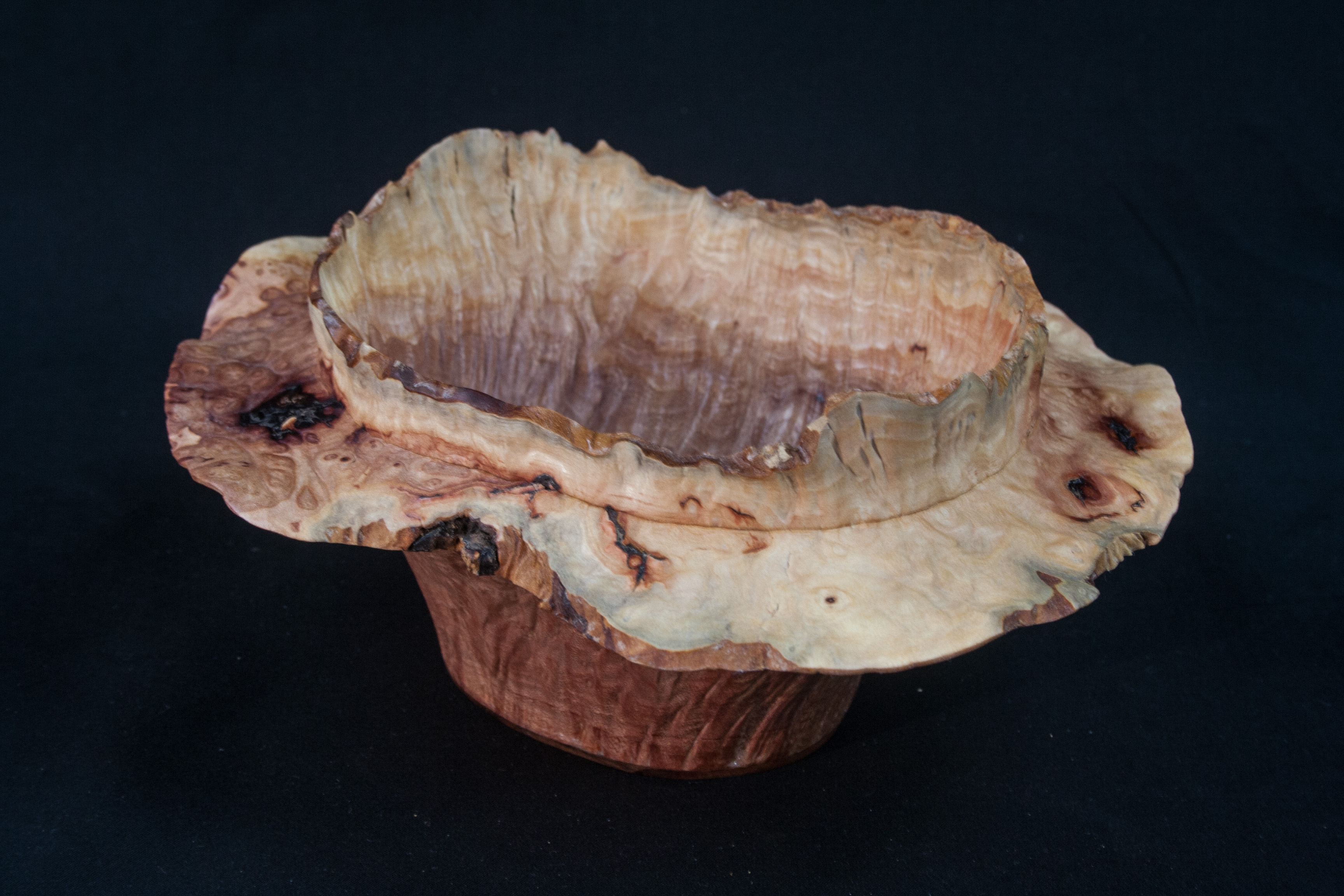 "43 Madron Burl Natural Edge Distorted 8 x 3,5.......  $215  ......... Located at ""The Real Mother Goose"" in Portland Oregon ....................SOLD"