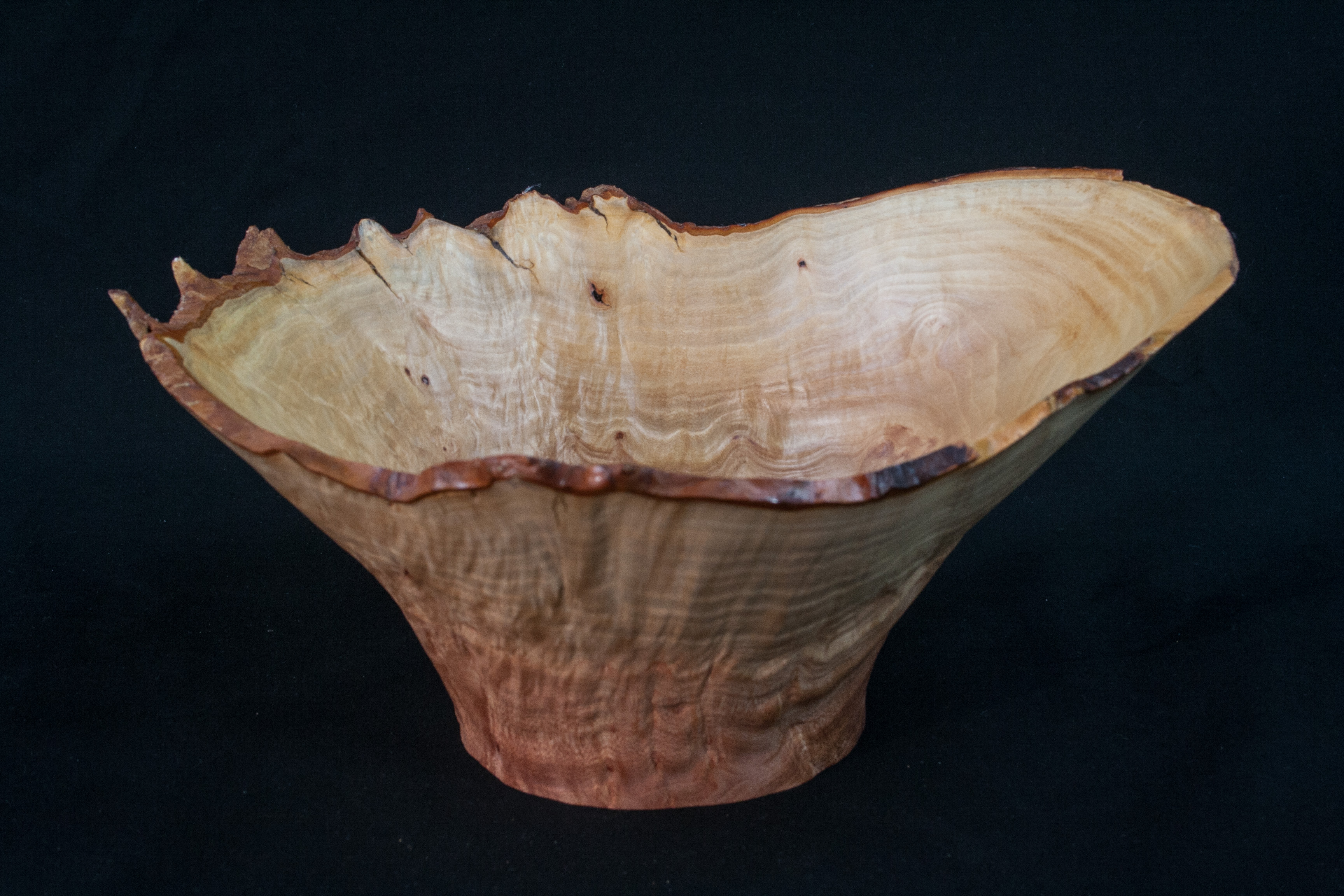 44 Madron Burl Natural Edge Distorted 10 x 5 ....... $109