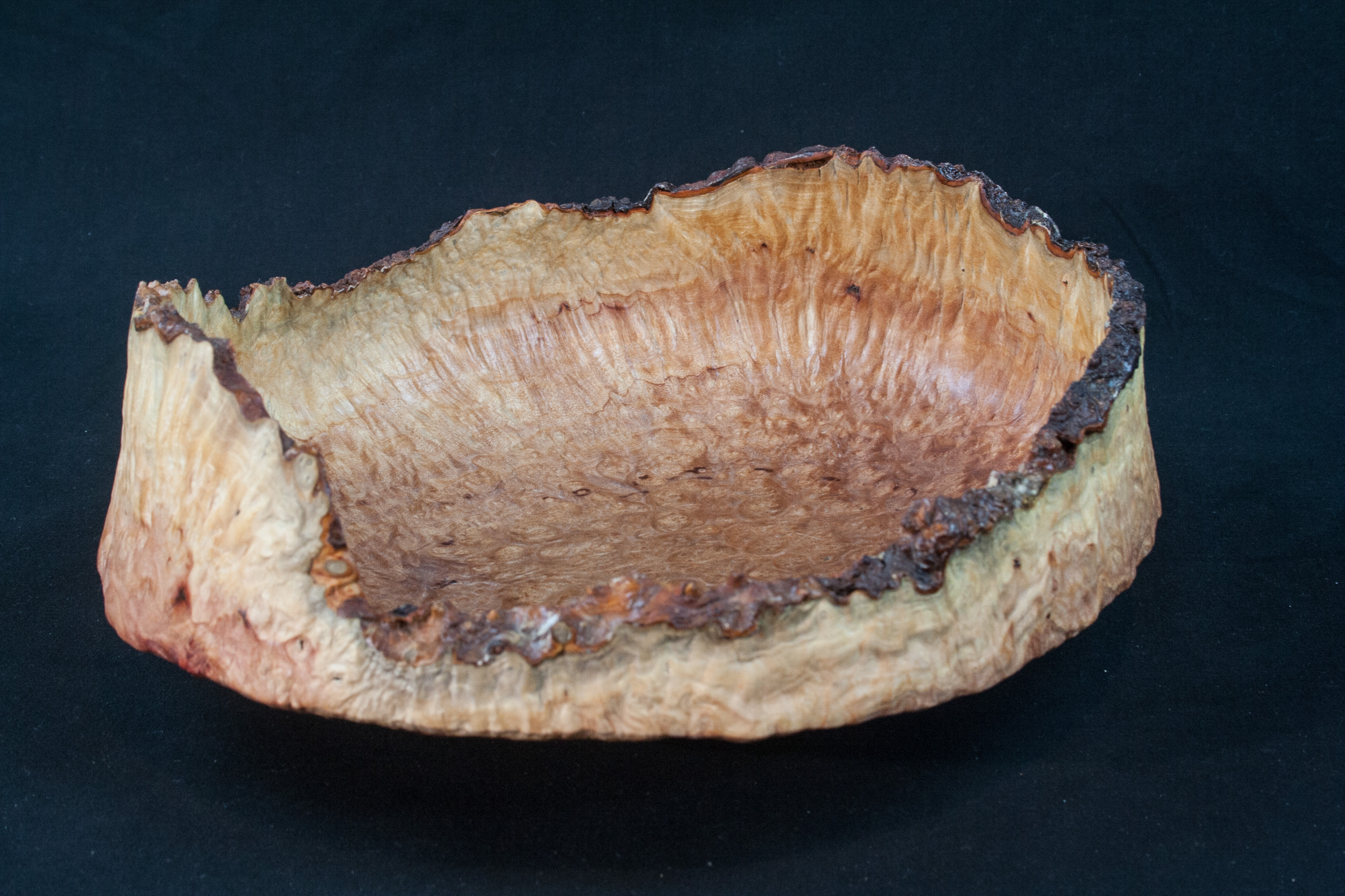 75 Madrone Burl Natural Edge Distorted 9 x 3,5  ..........$169
